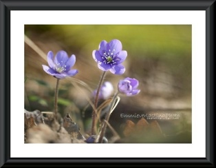 Beautiful blue. Foto A4 http://epla.no/shops/emmieverlasting/