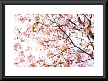 Dear cherry. Foto A4 http://epla.no/handlaget/produkter/709146/