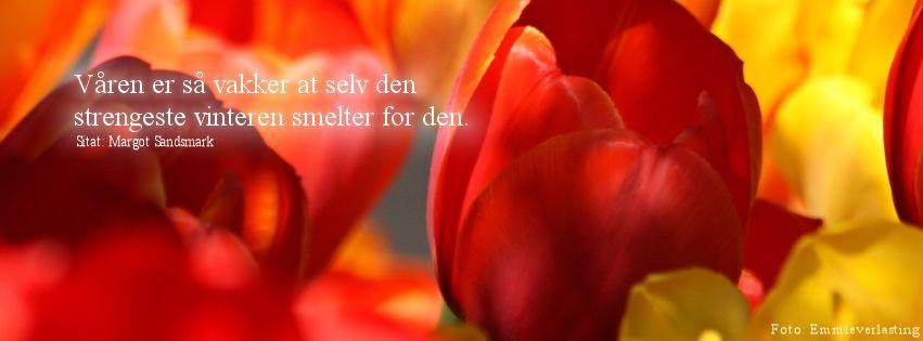 Facebookheader tulipan Emmieverlasting