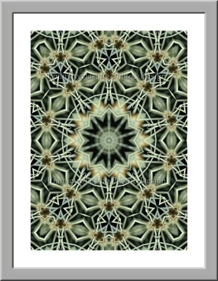 """Emmieverlasting: """"Cactus abstract"""" Et abstrakt bilde av kaktus. http://epla.no/handlaget/produkter/791479/"""