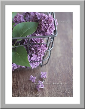 Emmieverlasting: Fine Lilacs. Bilde av vakre syriner i en rustikk kurv. Str. A3 http://epla.no/handlaget/produkter/792331/