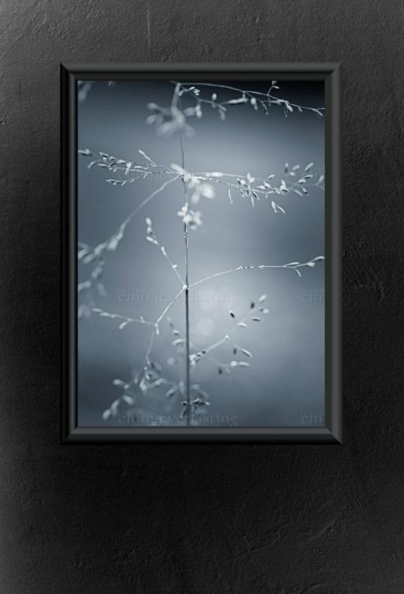 Emmieverlasting Straw by nature. Foto A3 http://epla.no/handlaget/produkter/809265/