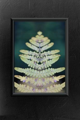 Emmieverlasting Fern. Foto A3 http://epla.no/handlaget/produkter/814276/
