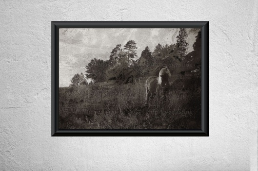 Emmieverlasting Horse meadow A3 http://www.emmieverlastingshop.com/415517979/product/1623949/horse-meadow-a3?catid=504314