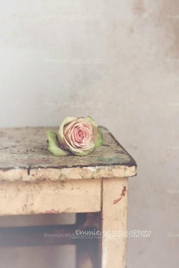 Emmieverlasting: SALG! 60%. Rustic rose. Foto A4 https://www.epla.no/handlaget/produkter/710439/