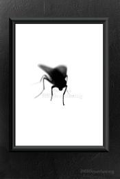 An ordinary fly. Foto A3 finner du hos Emmieverlasting https://www.epla.no/shops/emmieverlasting/