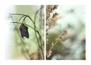 EMMIEVERLASTING: Sett a 2 bilder . A4 https://www.epla.no/handlaget/produkter/841393/