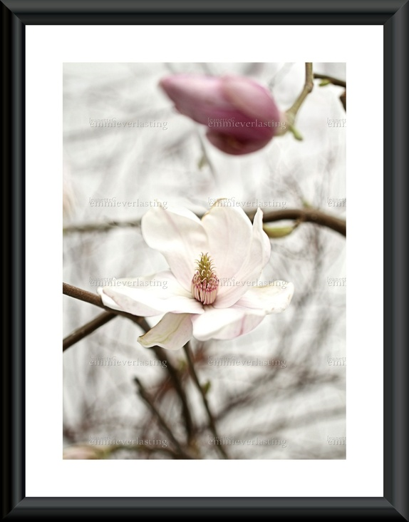 EMMIEVERLASTING: Alluring Magnolia Foto A3 https://www.epla.no/handlaget/produkter/840891/