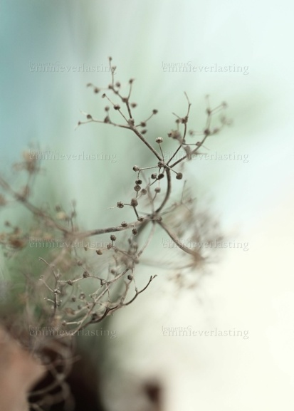 Emmieverlasting: Withered. Foto A3 https://www.epla.no/handlaget/produkter/838018/