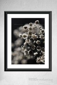 EMMIEVERLASTING: Dark Elegance Foto A4 https://www.epla.no/handlaget/produkter/844485/