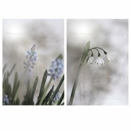 EMMIEVERLASTING: Sett a 2 bilder i 13x18 https://www.epla.no/handlaget/produkter/843773/