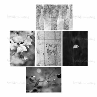 EMMIEVERLASTING: Carpe Diem. Sett av 5 bilder i 13x18 https://www.epla.no/handlaget/produkter/845882/