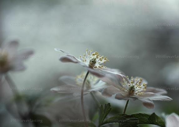 EMMIEVERLASTING: Tale of spring. Fotokunst A3 - 480,- https://www.epla.no/handlaget/produkter/848284/