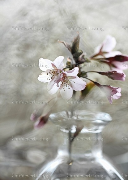 EMMIEVERLASTING: Blossom. Fotokunst A3 - 480,- https://www.epla.no/handlaget/produkter/848302/
