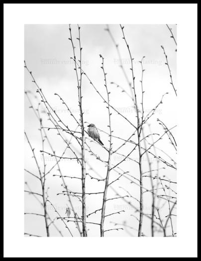 EMMIEVERLASTING: On a twig. Fotokunst A3 https://www.epla.no/handlaget/produkter/875575/